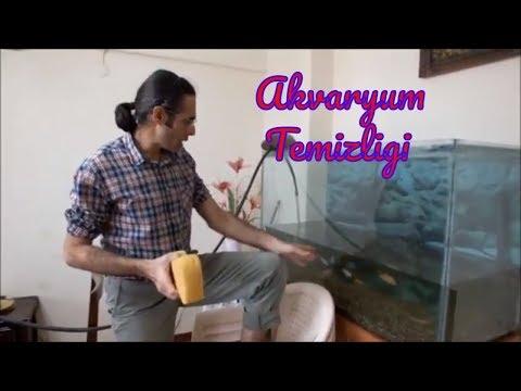 Akvaryum Temizliği Nasıl Yapılır