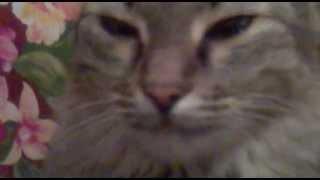 кошки тоже плачут