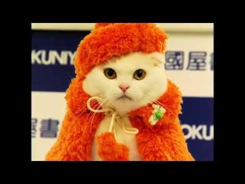 Cмотреть видео Гламурная одежда для кошек. Кошки модницы в кошачьей одежде