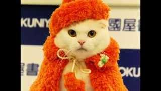 Гламурная одежда для кошек. Кошки модницы в кошачьей одежде