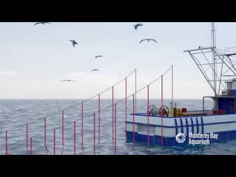 How Seafood is Caught: Longlining