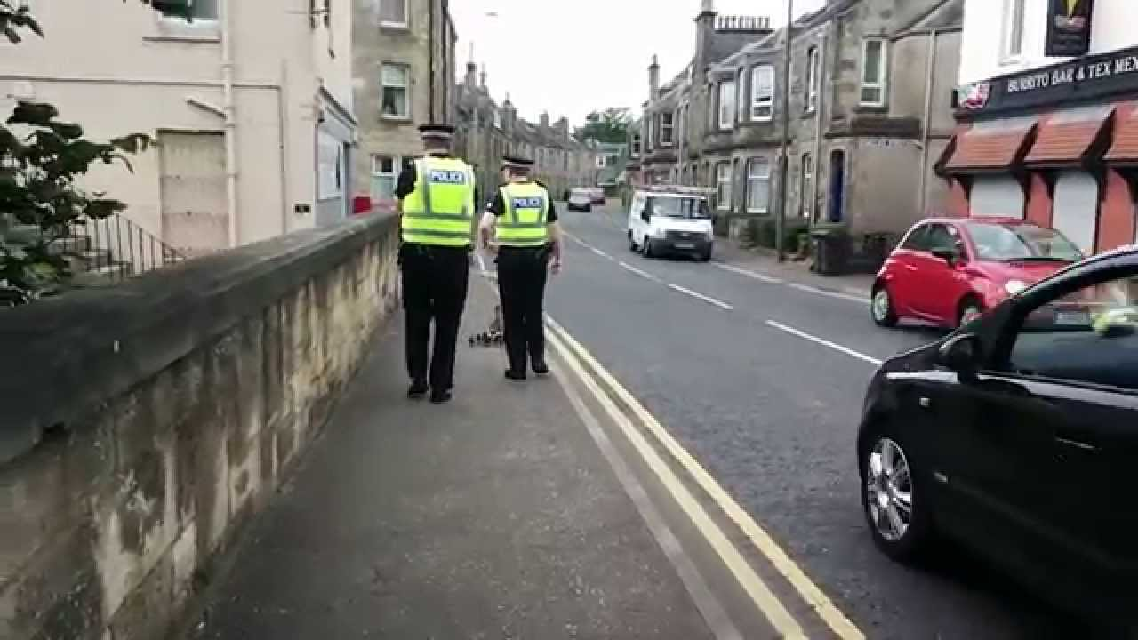 Scottish Police Escorting Ducks To Safety In St Andrews Is Quite Touching