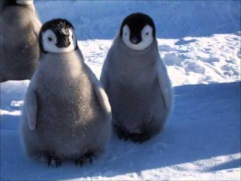 Keistuoliu Teatras – Du mazi balti pingvinai