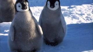 Keistuoliu Teatras - Du mazi balti pingvinai