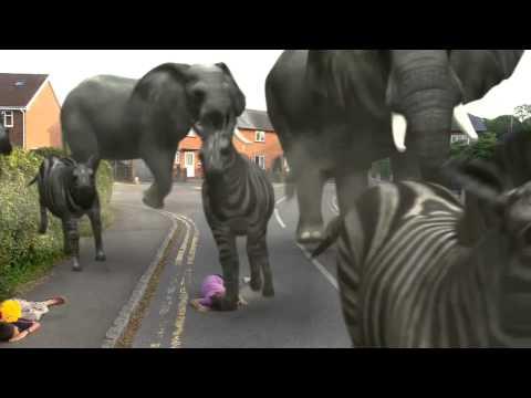 ANIMALS ON THE RUN!!!