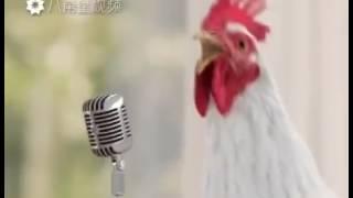 Najśmieszniejsze zwierzęta #1 || Śpiewające Kury!