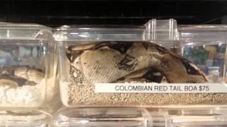 New York White Plains reptile expo 07/12/15