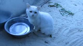 Спасибо вам мои дорогие Спасибо от имени кошек котят и котиков..СПАСИБО ВАМ ДРУЗЬЯ!