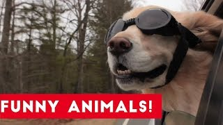 Top 10 Funny Dog Videos That Went Viral