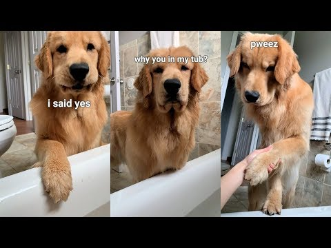 Dog Follows Me Into Bathroom