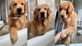 dog-follows-me-into-bathroom
