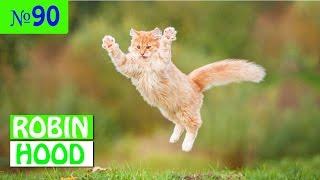ПРИКОЛЫ 2017 с животными. Смешные Коты, Собаки, Попугаи // Funny Dogs Cats Compilation. Апрель №90