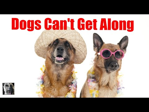 2 Male Dogs Can't Get Along - Dog Training Video - ask me anything