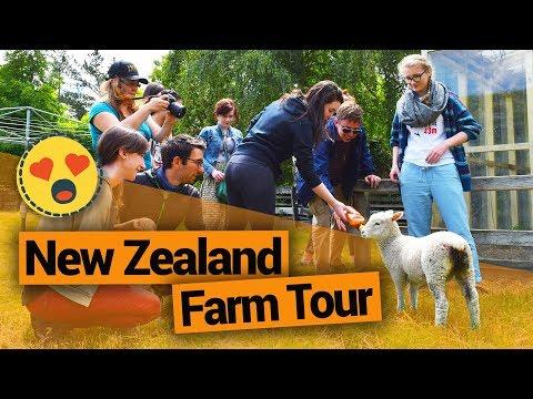 New Zealand Farm Tour at Morelea Farm – New Zealand's Biggest Gap Year – BackpackerGuide.NZ