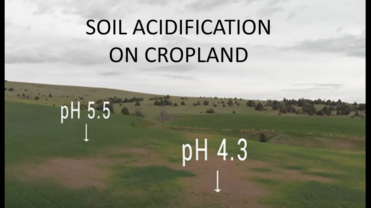 Acidification of Cropland Soil: Impact, Causes, and Solutions