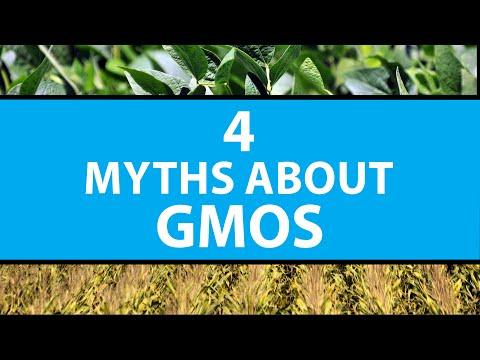 4 Myths About GMOs | Mashable