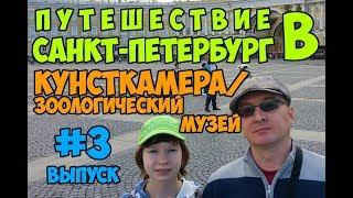 Смотреть видео Путешествие в Санкт-Петербург #3┃Кунсткамера/зоологический музей онлайн