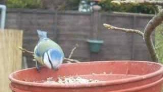 A Day In The Life Of A Garden Bird Feeder