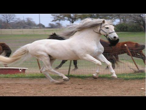 Curso Como Comprar Cavalos - Cavalo de Trote