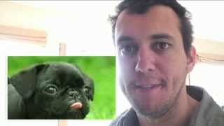 Pugs !!! The Origin!!!!