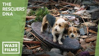 Most Beautiful Dog Reunion Ever After Hurricane Katrina  Hope For Dogs | My DoDo