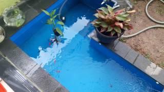 Kolam Ikan Hias Mini dan kelengkapannya