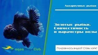 Золотые рыбки: совместимость и параметры воды