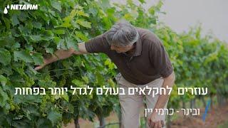 """סמינר/ובינר """"בואו נגדל יחד עם השקיה מדייקת בכרמי היין""""   נטפים"""