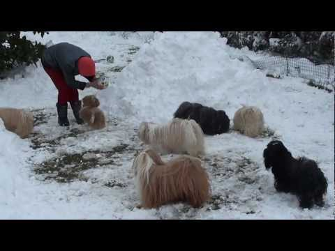 Happy Dogs in Winter Funny