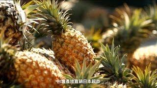 【餐飲業】大苑子 - 外銷日本的台灣金鑽鳳梨,認真看你才吃的到喔! | 企業形象影片 | PIAD影片製作公司
