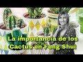 La importancia de los cactus en el Feng Shui