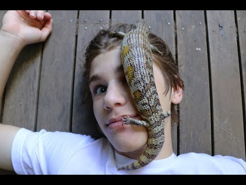 How To Find REPTILES In Australia! HD