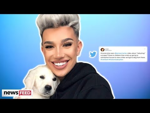 The Internet Is TORN Over James Charles 'Fake' Adopting A Dog! thumbnail