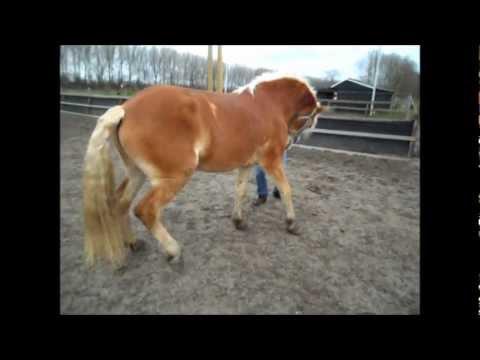 Tinley cursus; Compliment leren bij een paard