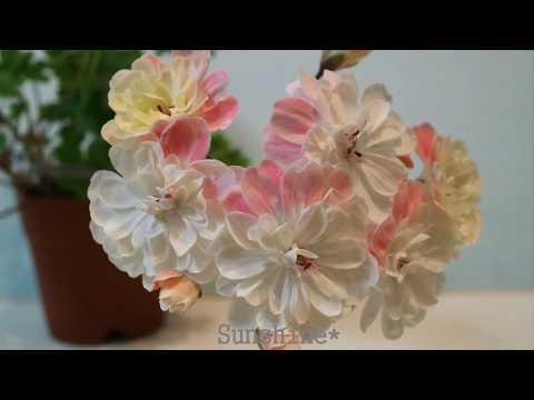 208.Zonartic Pelargonium Lara Marjorie in 2018 조나틱 라라 마저리 (라라 마조리)