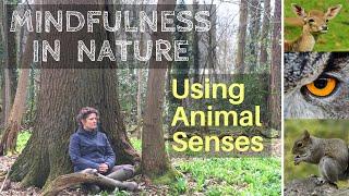 Mindfulness in Nature: Using Animal Senses