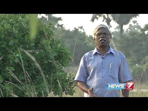 Repeat Naayuruvi keerai & Pannai Keerai : Medicinal benefits