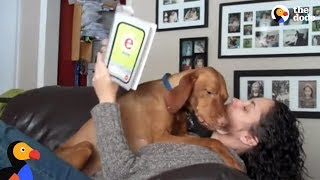 Dog REFUSES To Let Mom Read | Happy National Love Your Pet Day from The Dodo