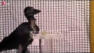 DokuHitec Intelligenzbestien Doku über intelligente Tiere Teil 1