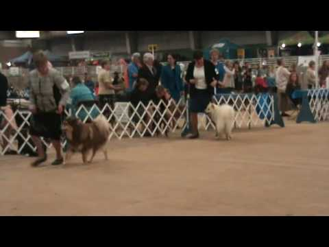 2017 Finnish Lapphunds