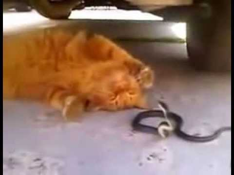 Змея и хвост кота