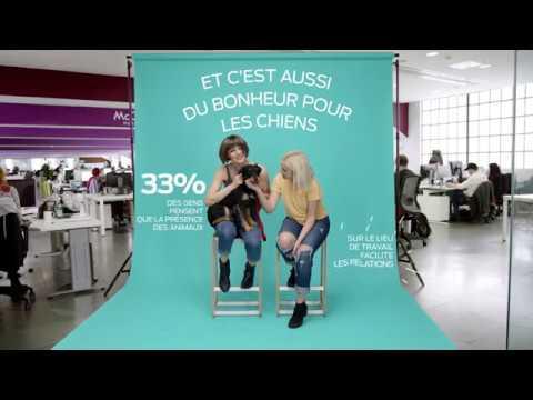 Vidéo Olivier Lambert Purina PetsAtWork (collaboration) film Web