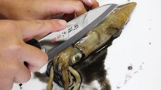 【釣り人の特権】生きたイカを麺つゆで泳がせた「沖漬け」とは?
