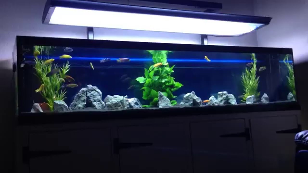 6ft Custom Aquarium Stand And Lighting Start To Finish