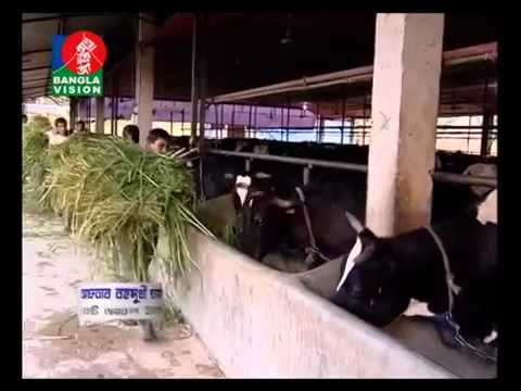 report on dairy industry of bangladesh Department of dairy science, bangladesh agricultural university, mymensingh- 2202,  calving to milk production recording of young cows 5-6  table 7  daily milk yield (l/d) of reported hf and sl crossbred cows over the last 30 years  in.