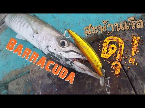 ตกปลาทะเล ตอน กัดดุ ทะลุเรือ  fishing technique Barracuda