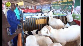 Zoom sur la 14e édition de la  foire des éleveurs du Sénégal