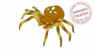 Как нарисовать черного паука крестовика карандашом(Как нарисовать паука поэтапно карандашом за короткий промежуток времени. Видео рассказывает о том, как..., 2014-06-29T07:53:40.000Z)
