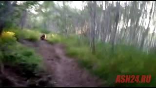 Охотник гоняет медведей