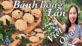 Thu hoạch Việt Quất và làm bánh bông lan thật là đẹp và ngon - Blueberry Muffins  - Cuộc Sống Mỹ